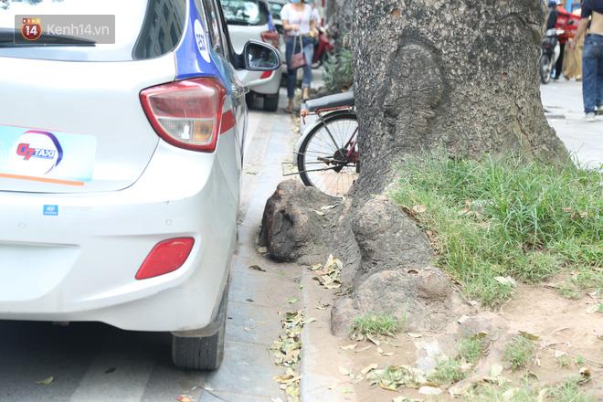 Ảnh: Cận cảnh hàng loạt cây xanh mục gốc, ngả hướng ra giữa đường ở Hà Nội - Ảnh 8.