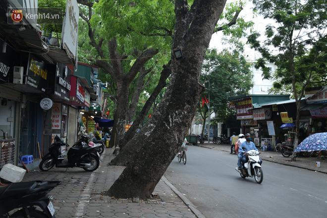 Ảnh: Cận cảnh hàng loạt cây xanh mục gốc, ngả hướng ra giữa đường ở Hà Nội - Ảnh 6.