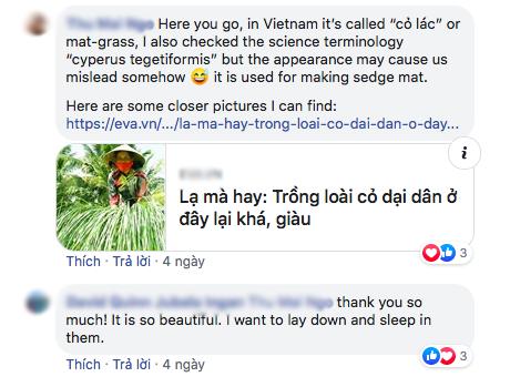 """Bộ ảnh đồng cỏ Việt Nam """"lượn sóng"""" đang gây bão mạng quốc tế, nhưng cả ngàn người nước ngoài lại bị nhầm lẫn ở một điểm này - Ảnh 2."""