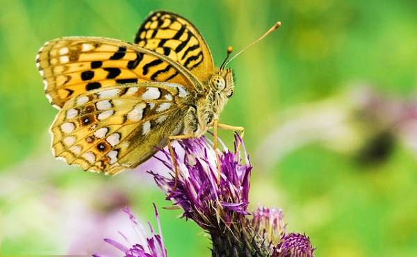 Cánh bướm đẹp 2