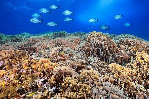 Kết quả hình ảnh cho phá rạn san hô Australia