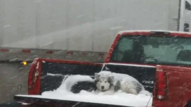 Kết quả hình ảnh cho chó chết rét ngoài trời tuyết