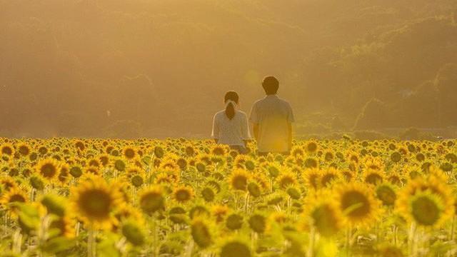 Kết quả hình ảnh cho làm gốm gần cánh đồng Hoa hướng dương tại Nhật Bản