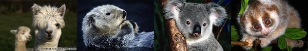 Hình ảnh kinh ngạc về bào thai động vật trong bụng mẹ 8