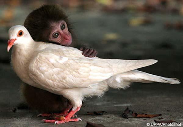 Xem nhện săn mồi thông minh, khỉ xỉa răng như người 1