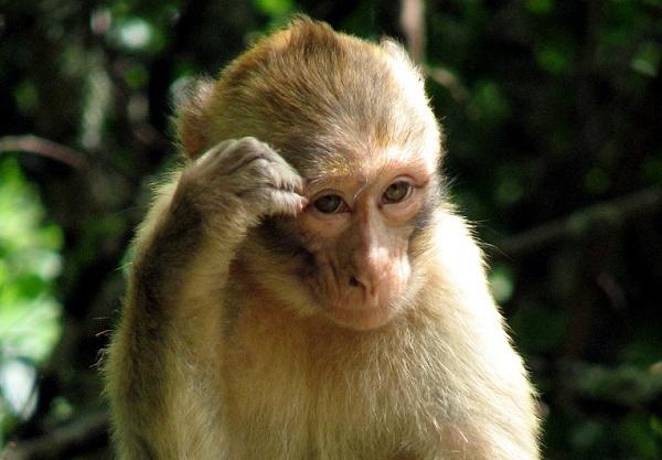Xem nhện săn mồi thông minh, khỉ xỉa răng như người 2