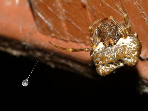Xem nhện săn mồi thông minh, khỉ xỉa răng như người 7