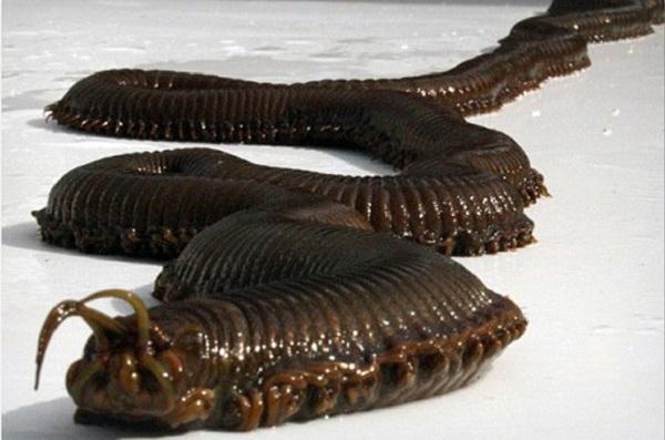 5 loài sâu đáng sợ nhất hành tinh 1