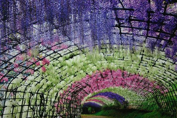 """Đẹp kinh ngạc vườn hoa """"tình yêu vĩnh cửu"""" ở Nhật Bản 9"""