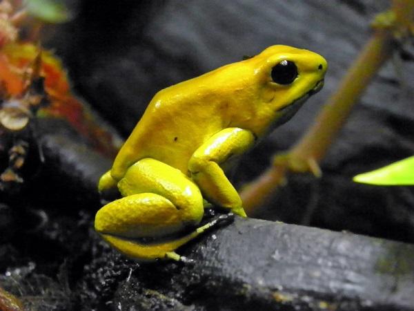 Những loài động vật nhỏ bé nhưng nguy hiểm nhất thế giới 5