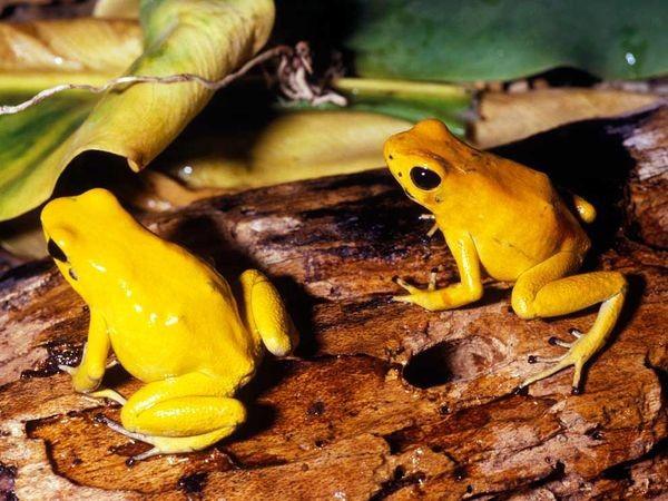 Những loài động vật nhỏ bé nhưng nguy hiểm nhất thế giới 6
