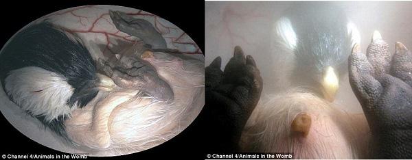 Hình ảnh kinh ngạc về bào thai động vật trong bụng mẹ 3