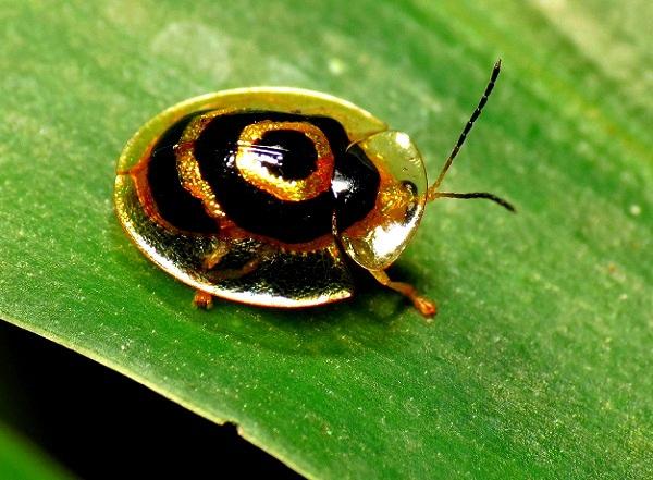"""""""Vẻ đẹp"""" hiếm có của các loài bọ trong tự nhiên 6"""