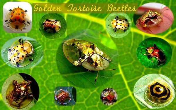 """""""Vẻ đẹp"""" hiếm có của các loài bọ trong tự nhiên 7"""