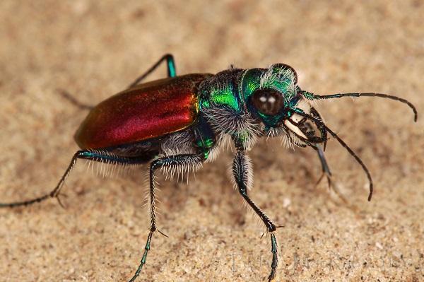 """""""Vẻ đẹp"""" hiếm có của các loài bọ trong tự nhiên 8"""