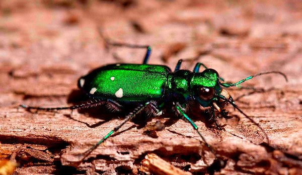 """""""Vẻ đẹp"""" hiếm có của các loài bọ trong tự nhiên 10"""