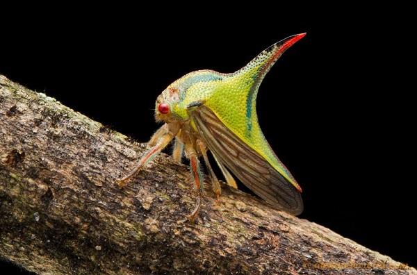 """""""Vẻ đẹp"""" hiếm có của các loài bọ trong tự nhiên 12"""