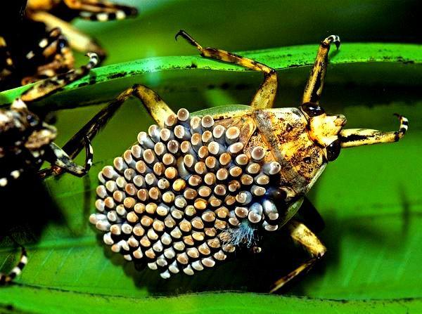 """""""Vẻ đẹp"""" hiếm có của các loài bọ trong tự nhiên 2"""