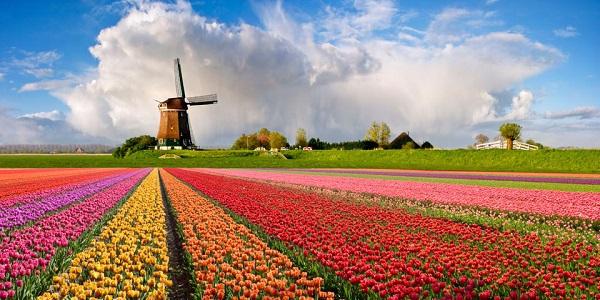 Những thiên đường hoa đẹp ngất ngây không thể không xem 1