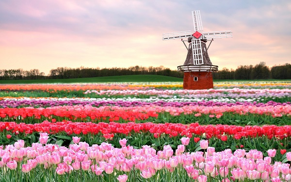 Những thiên đường hoa đẹp ngất ngây không thể không xem 2
