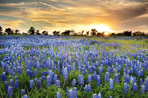 Những thiên đường hoa đẹp ngất ngây không thể không xem 6