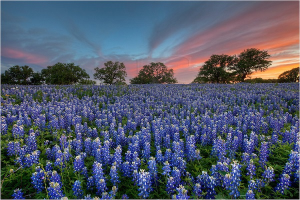 Những thiên đường hoa đẹp ngất ngây không thể không xem 8