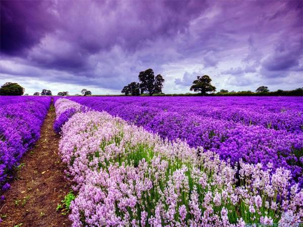 Những thiên đường hoa đẹp ngất ngây không thể không xem 13