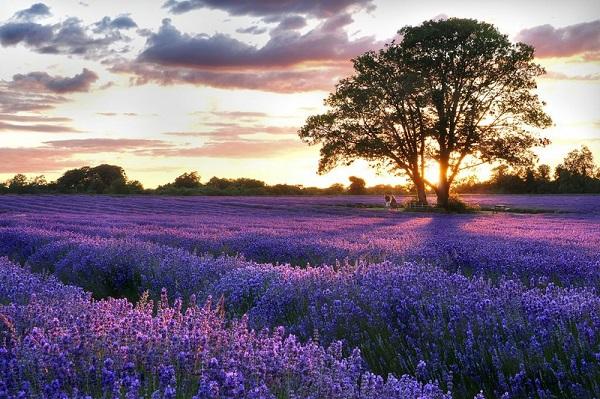 Những thiên đường hoa đẹp ngất ngây không thể không xem 11