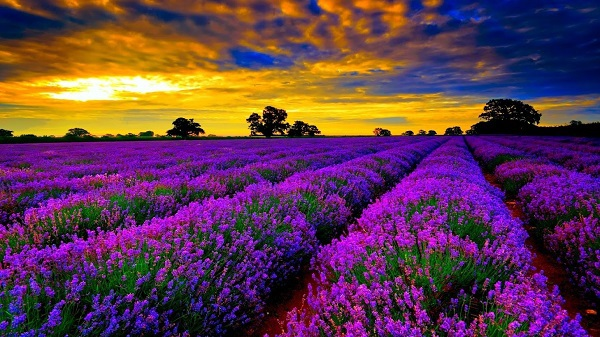 Những thiên đường hoa đẹp ngất ngây không thể không xem 12