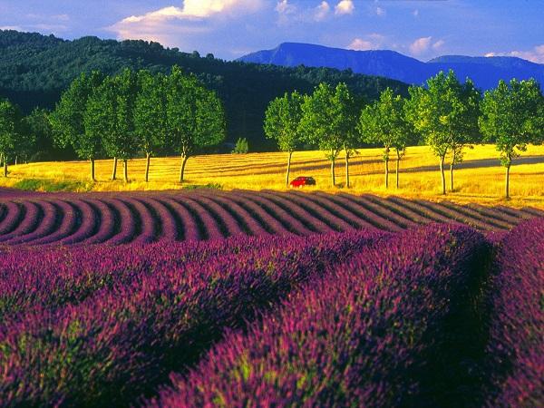 Những thiên đường hoa đẹp ngất ngây không thể không xem 14