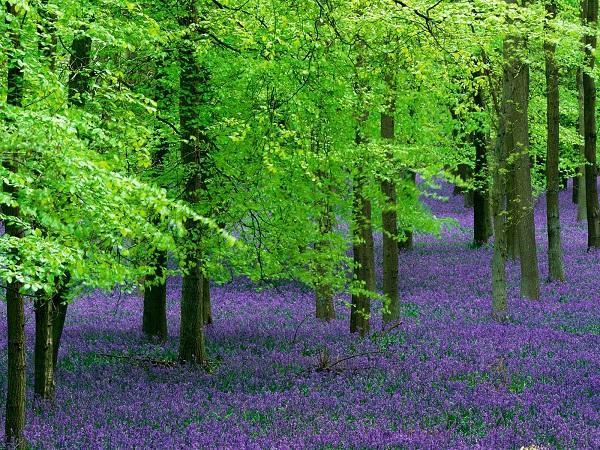 Những thiên đường hoa đẹp ngất ngây không thể không xem 19