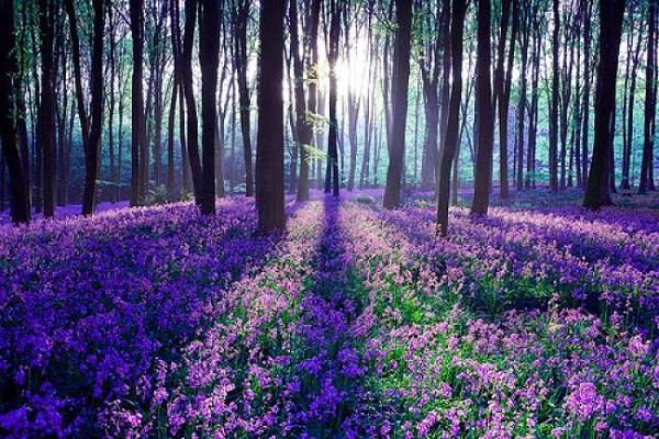 Những thiên đường hoa đẹp ngất ngây không thể không xem 20