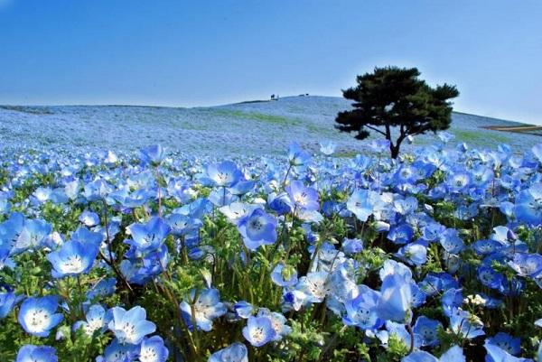 Những thiên đường hoa đẹp ngất ngây không thể không xem 21