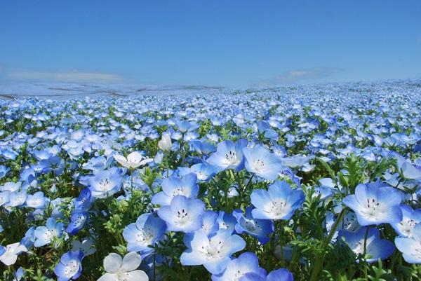 Những thiên đường hoa đẹp ngất ngây không thể không xem 22