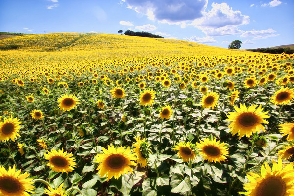 Những thiên đường hoa đẹp ngất ngây không thể không xem 17