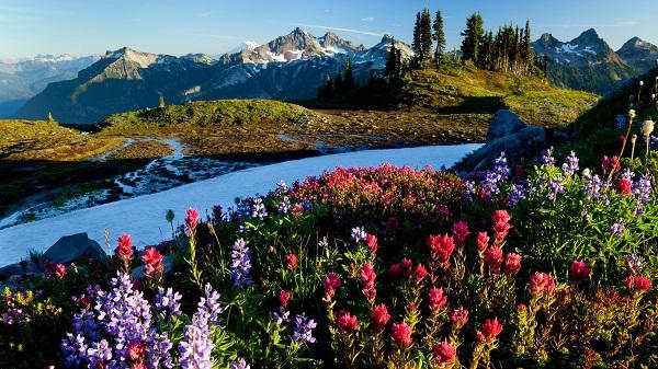 Những thiên đường hoa đẹp ngất ngây không thể không xem 26