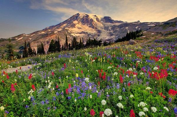 Những thiên đường hoa đẹp ngất ngây không thể không xem 27