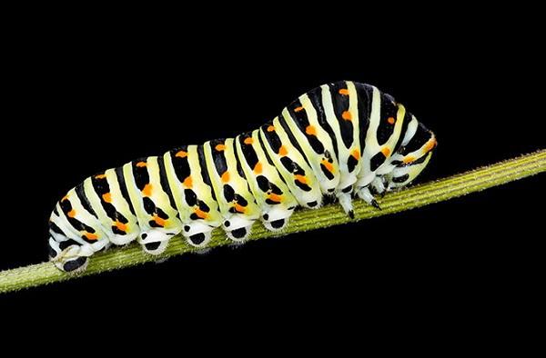 Hình ảnh đa chiều mới nhất của quá trình sâu biến thành bướm 1