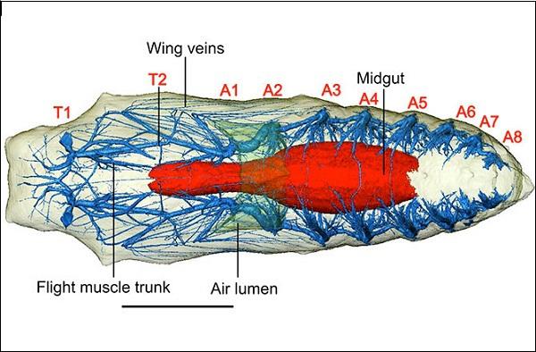 Hình ảnh đa chiều mới nhất của quá trình sâu biến thành bướm 3