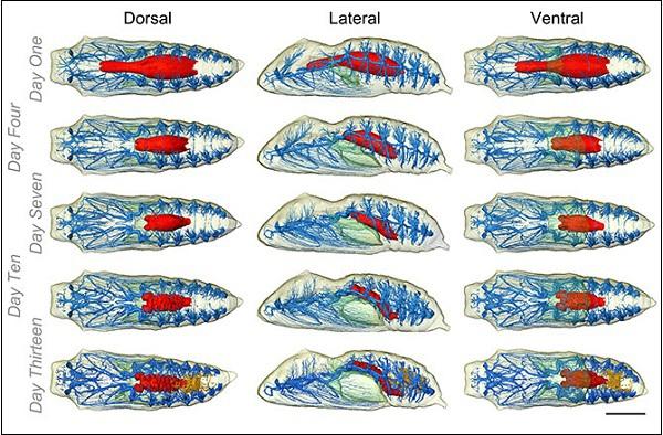 Hình ảnh đa chiều mới nhất của quá trình sâu biến thành bướm 5