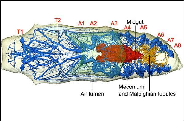 Hình ảnh đa chiều mới nhất của quá trình sâu biến thành bướm 6