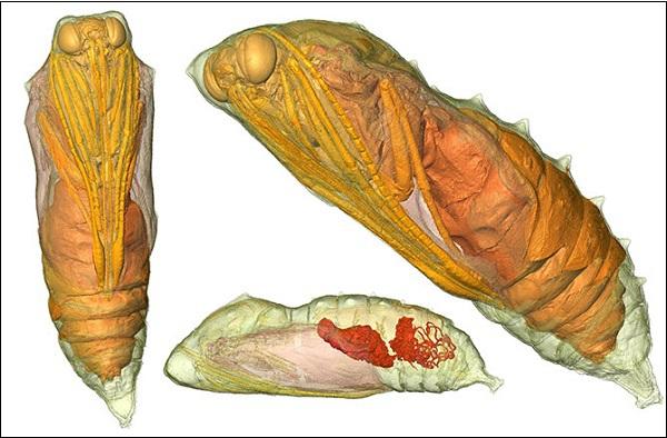 Hình ảnh đa chiều mới nhất của quá trình sâu biến thành bướm 8