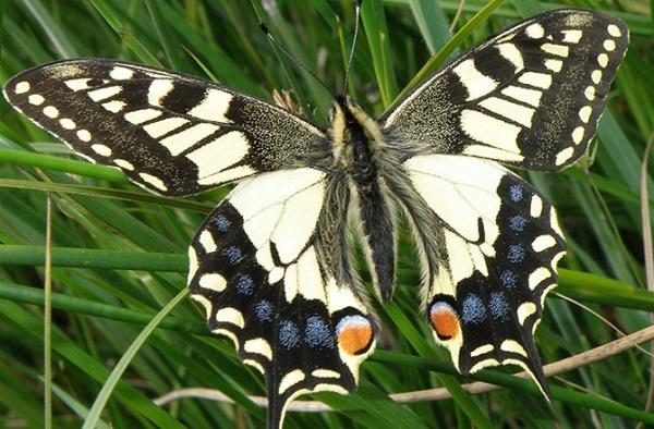 Hình ảnh đa chiều mới nhất của quá trình sâu biến thành bướm 9