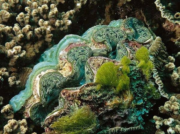 """Những sinh vật biển """"quái lạ"""" ở rạn san hô 1"""