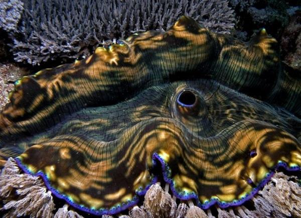 """Những sinh vật biển """"quái lạ"""" ở rạn san hô 3"""
