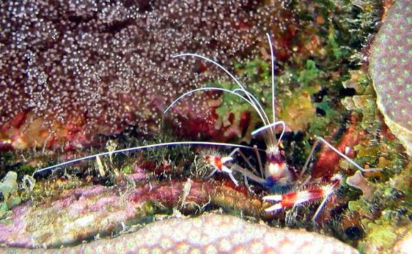 """Những sinh vật biển """"quái lạ"""" ở rạn san hô 6"""