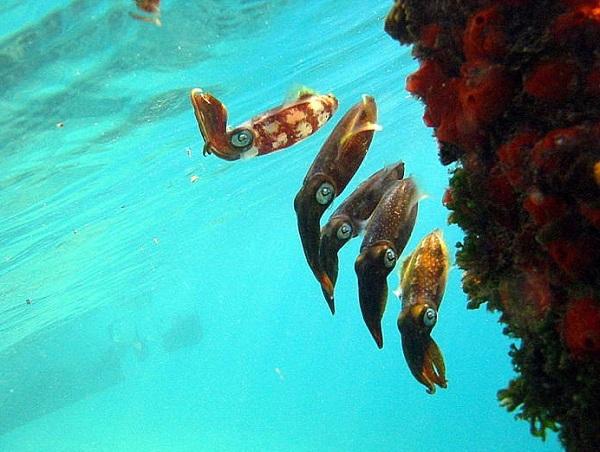 """Những sinh vật biển """"quái lạ"""" ở rạn san hô 9"""