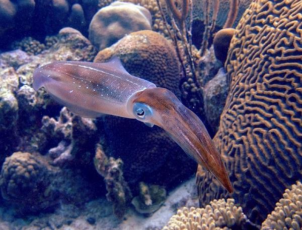 """Những sinh vật biển """"quái lạ"""" ở rạn san hô 12"""