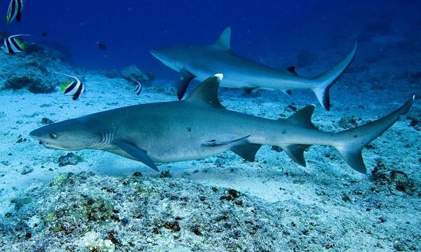 """Những sinh vật biển """"quái lạ"""" ở rạn san hô 14"""