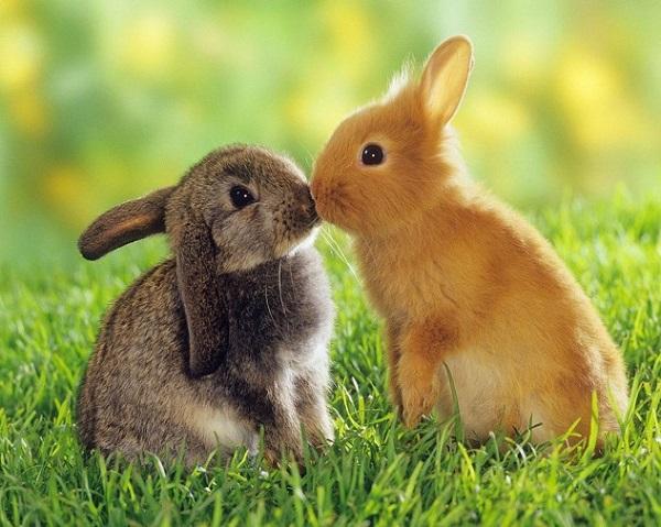 Khả năng thích nghi với môi trường đến khó tin của động vật 7